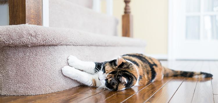 Katzen erziehen – geht das überhaupt?