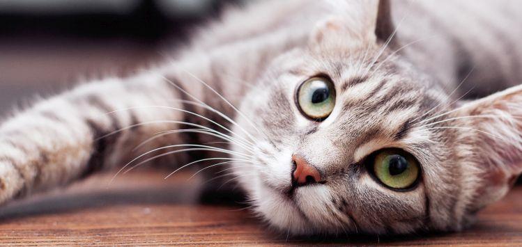 Adopter un chat et bien s'en occuper