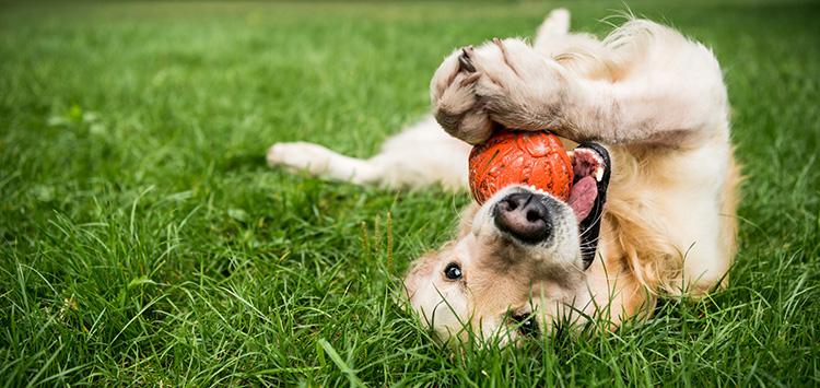 Honden bezighouden: 5 leuke ideeën
